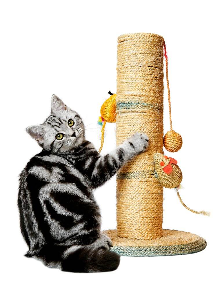 Kitty Scratch Post